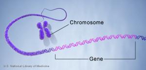 geneinchromosome